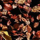 Il saluto dell'autunno