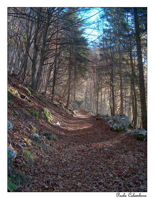 Il sentiero