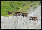 il sentiero dei Mufloni