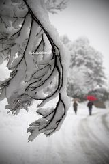 Il silenzio e l'odore della neve