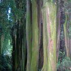 il Silenzio....del bosco