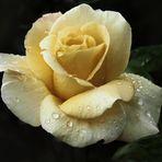 .....il tempo delle rose ..non finisce mai....