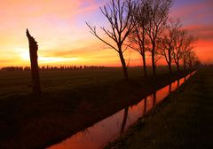 Il tramonto dei pioppi (The sunset of the poplars)