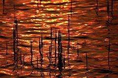 Il tramonto vissuto dalla natura