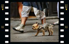 Il turista cagnolino a Firenze
