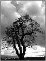 il vecchio albero