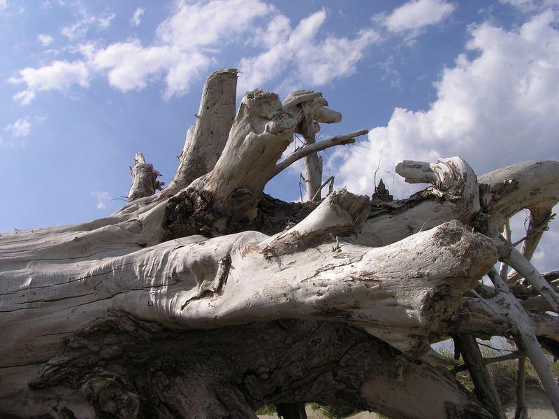 Il vecchio legno norvegese - The old Norwegain wood