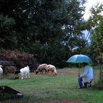 Il vecchio pastore - The old shepherd