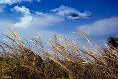 Il vento