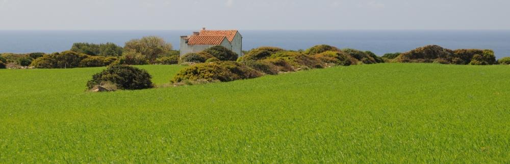 Il verde della Sardegna