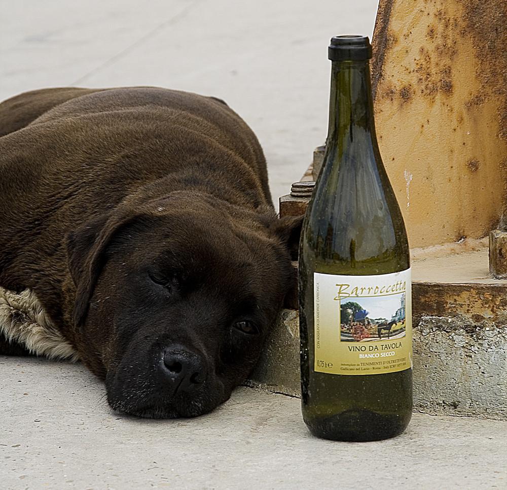 Il vino non lo reggo!!!!!!!