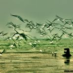 il volo dei gabbiani