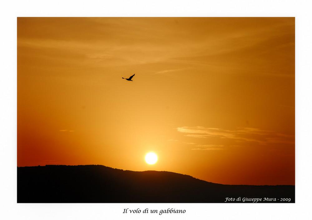 Il volo di un gabbiano