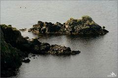 Iles Shetland 04
