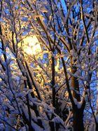 Illuminated winter tree