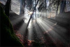 ~ Illumination I ~