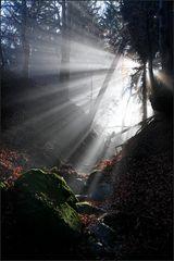 ~ Illumination VII ~