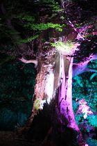 Illuminierte Bäume - Illumina 2013