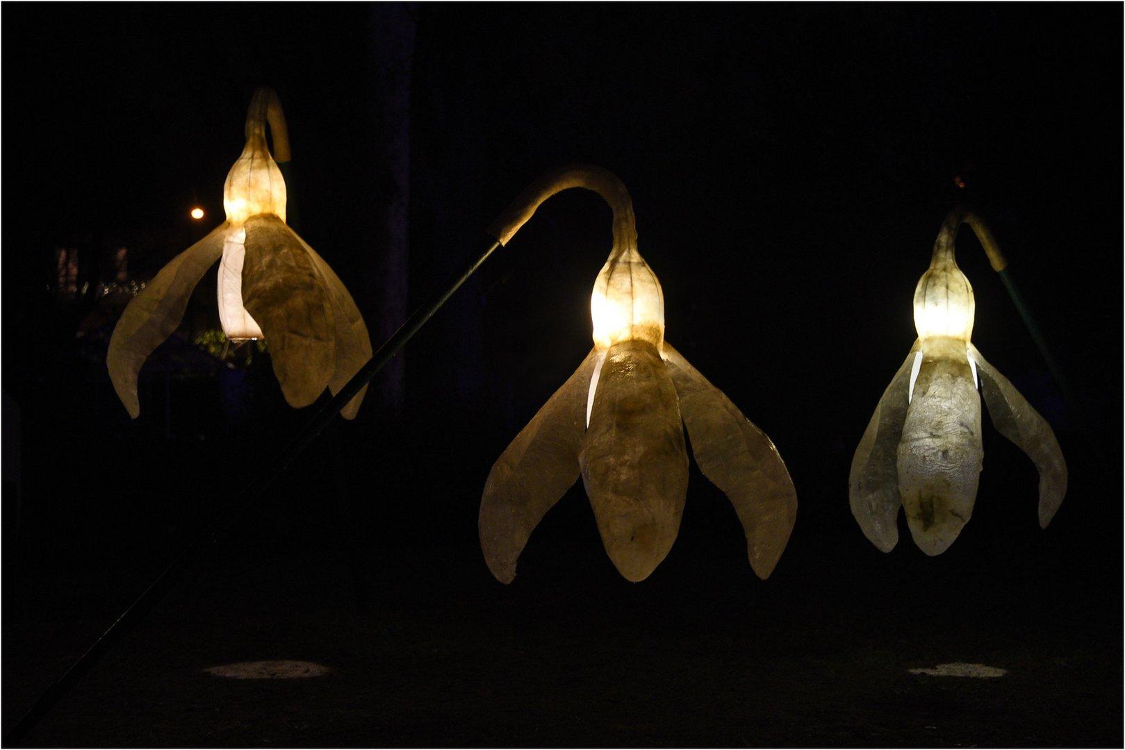 illuminierte Mittwochsblümchen...