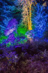 Ilumina 2015 Märchenbäume
