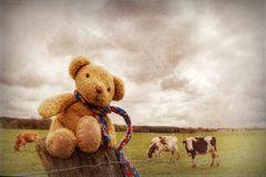 I´m a cowboy