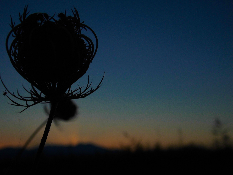 Im Abendlicht bricht die Spinne auf