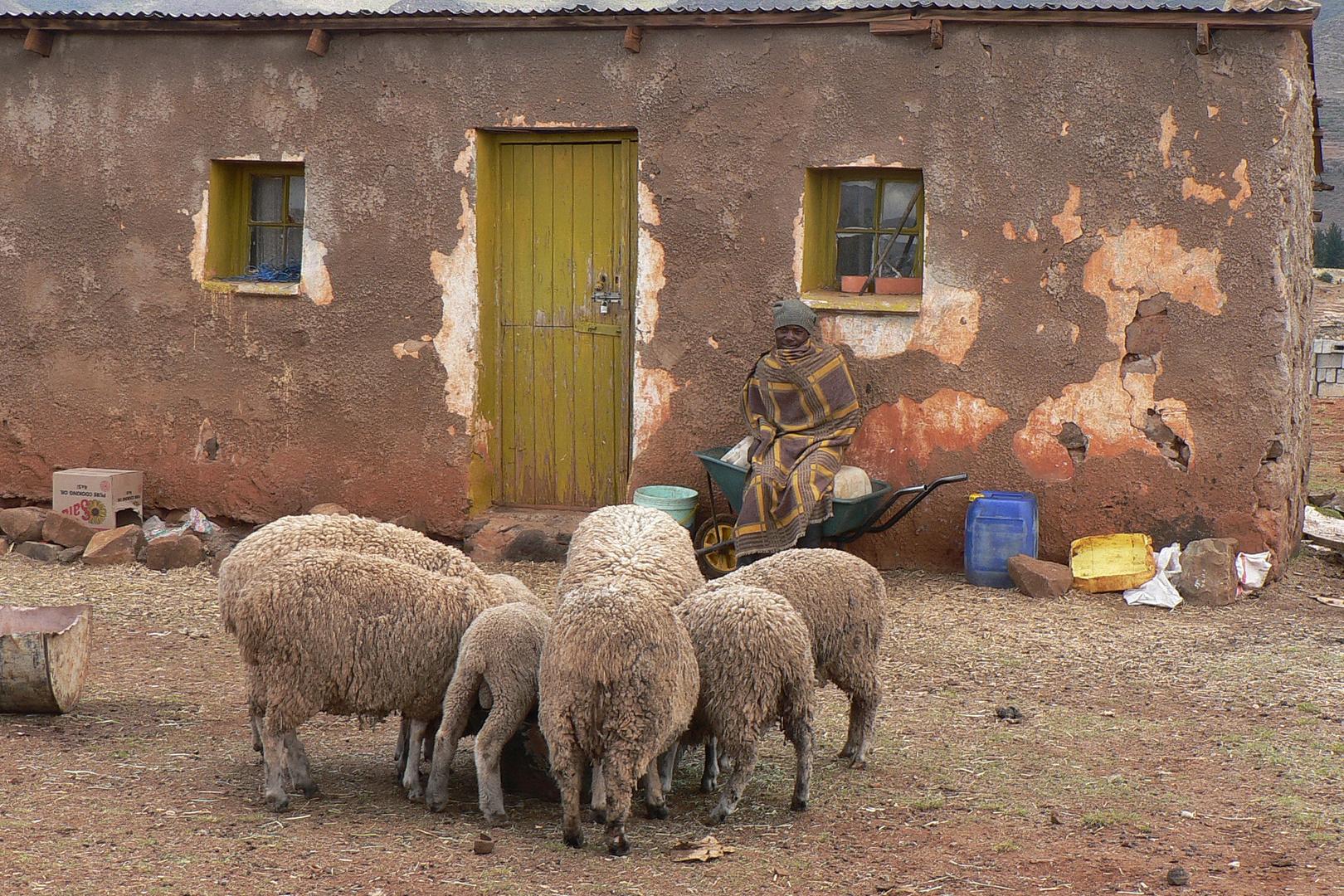 Im afrikanischen Zwergstaat Lesotho