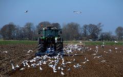 Im Agrarland Schleswig-Holstein haben die Bauern ihre eigenen Regeln ....
