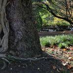 Im alten Park