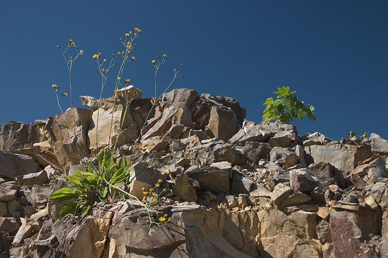 Im alten Steinbruch
