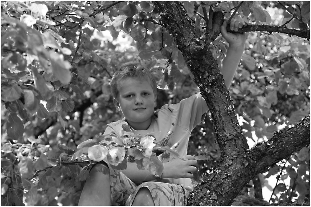 Im Apfelbaum (grau)