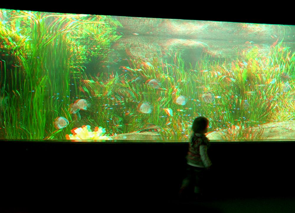 Im Aquarium (3D)