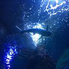 Im Aquarium