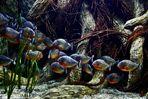 Im Aquarium vom Loro Parque