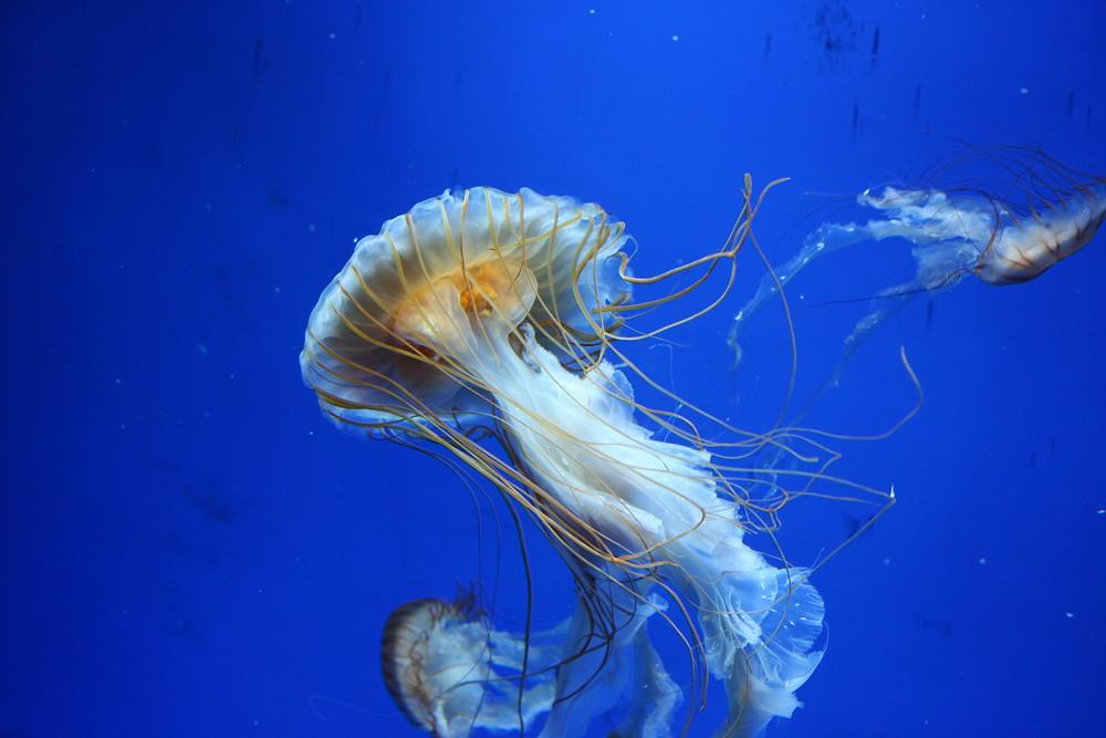 Im Aquarium von Genua