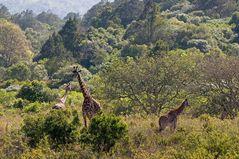 Im Arusha Nationalpark ~2~