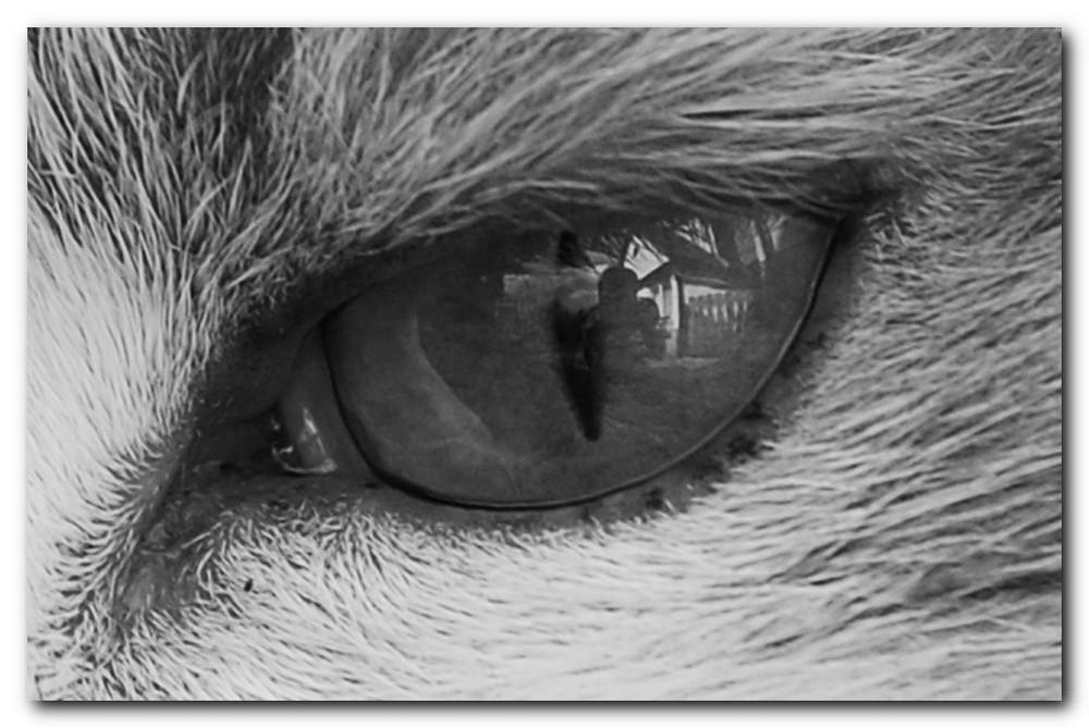 Im Auge der Katze