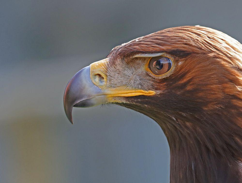 Im Auge des Adlers...