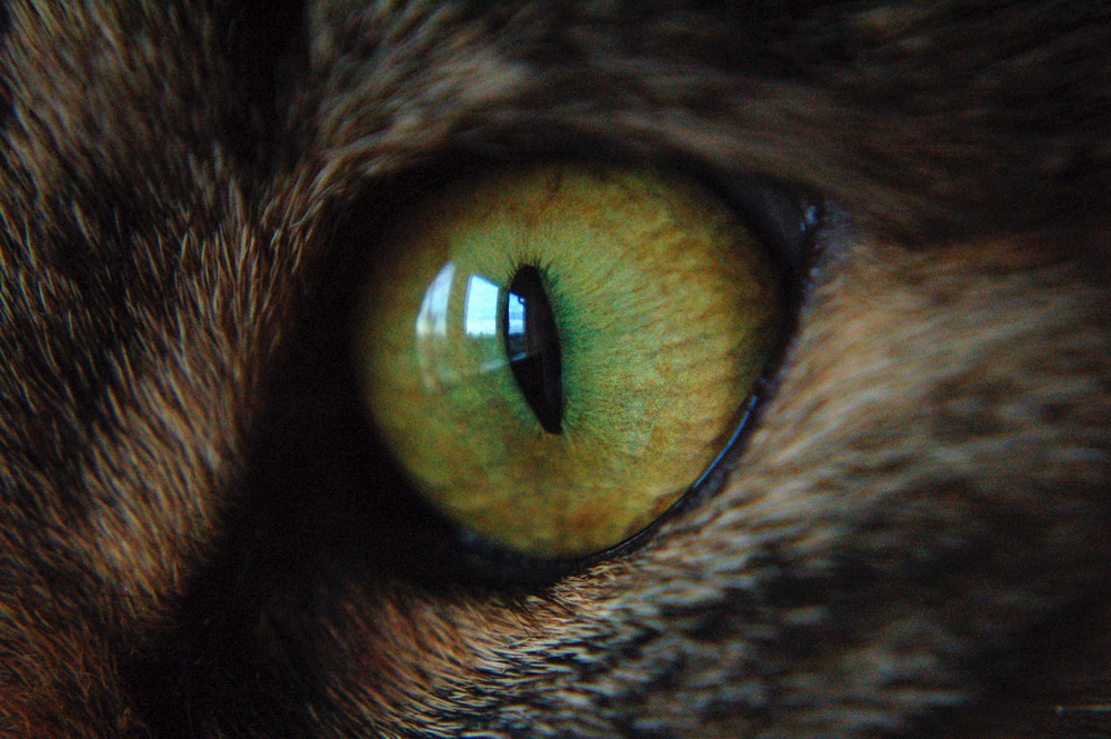 ..im Auge des Betrachters..II