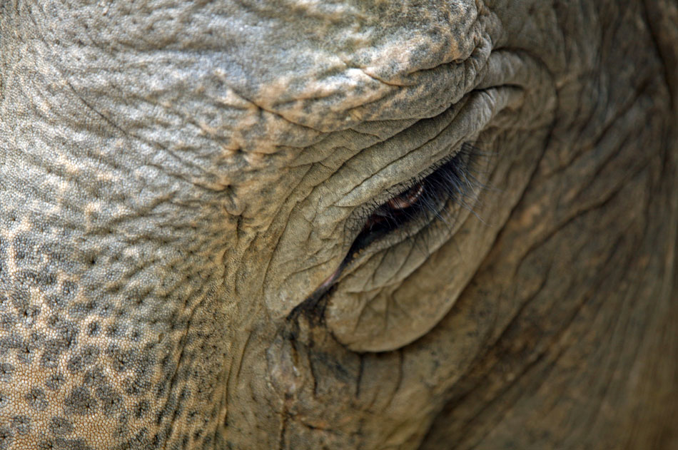Im Auge des Elefanten