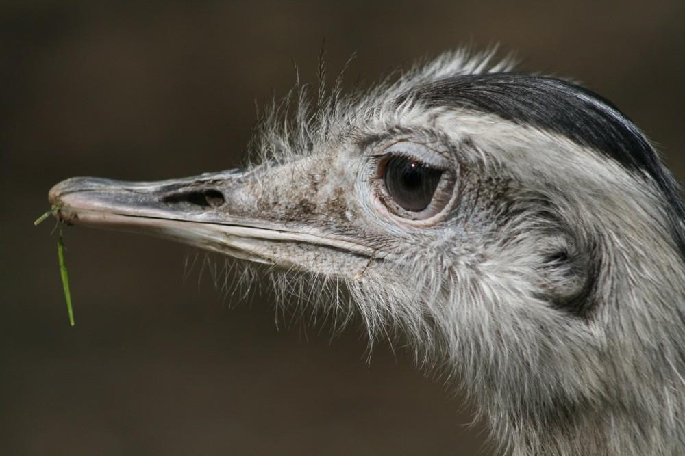 Im Auge des Emu ...