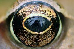 Im Auge des Grasfrosches......