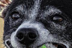 Im Auge des Hundes