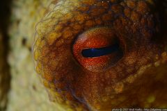 Im Auge des Octopus