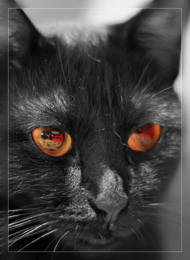 Im Auge des Tigers