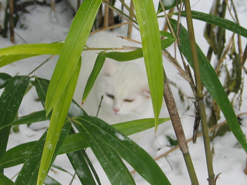 im Bambus-rahmen Foto & Bild | tiere, haustiere, katzen Bilder auf ...