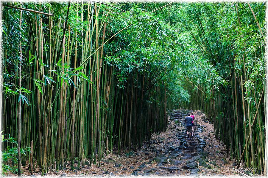 Im Bambuswald Von Maui Foto Bild North America United States