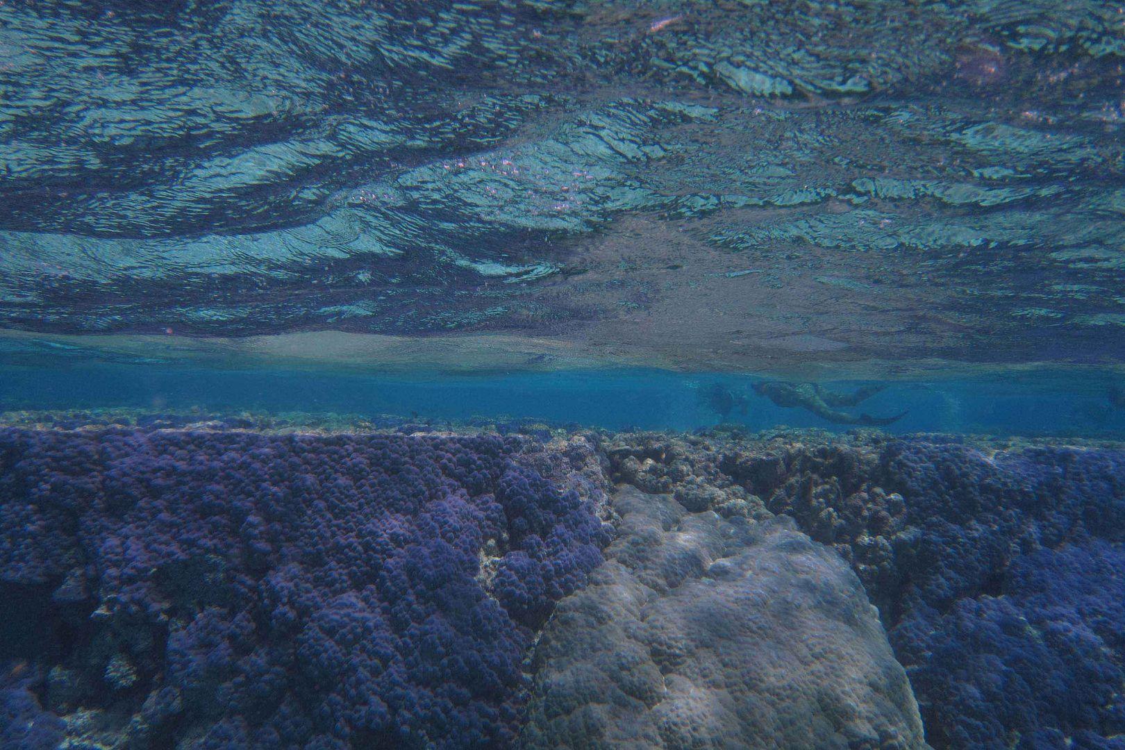 ¸.•*¨`* •. Im Bann der Unterwasserwelt .•*¨`* •.¸