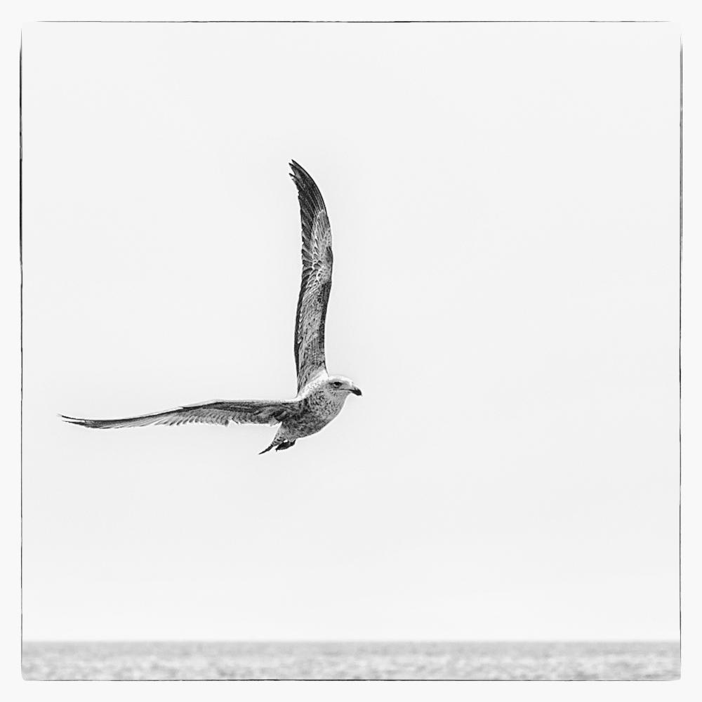 … im Banne eines Flügelschlags….