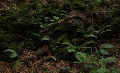 im Bergwald